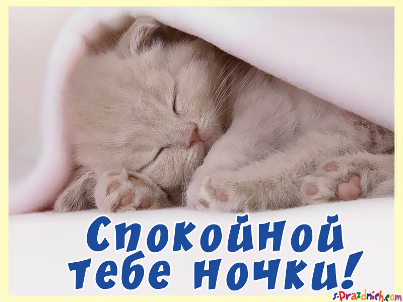 картинка сладких снов котенок медово-желтые