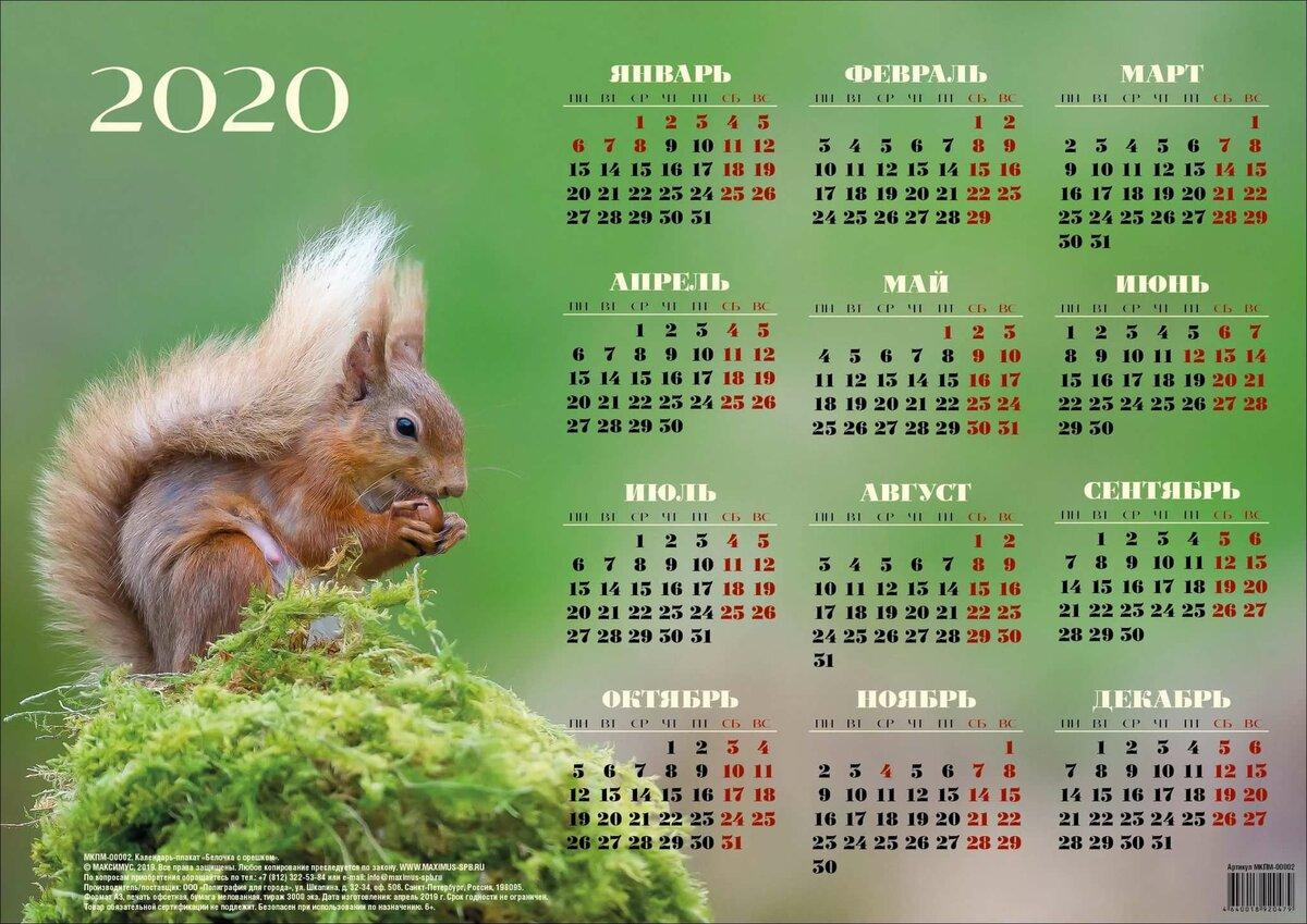 также плакат на календарь жилет