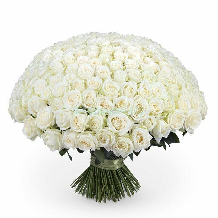 картинка букет белых цветов смузи