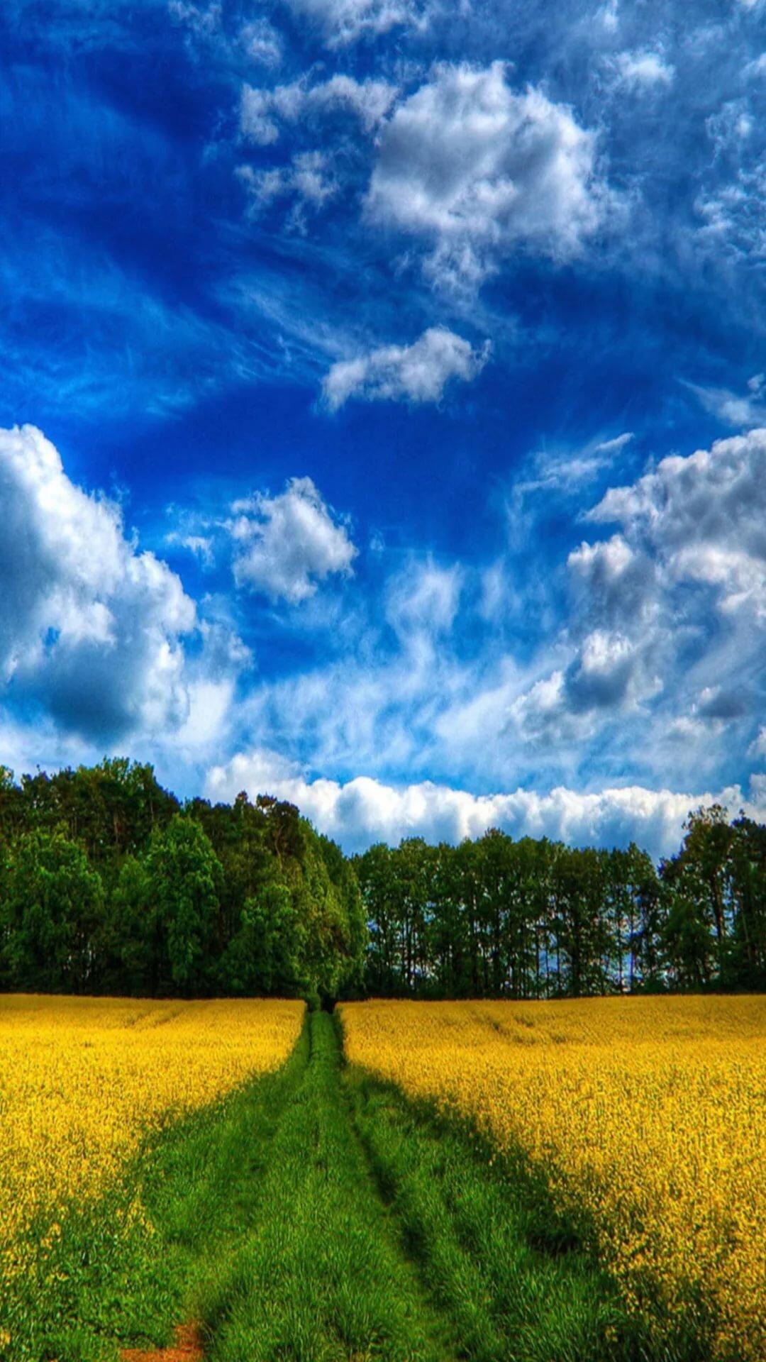 Природа балашова фото период июня