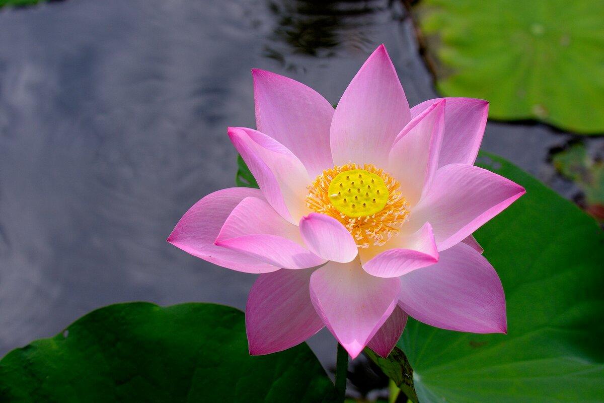 Картинка цветок растения