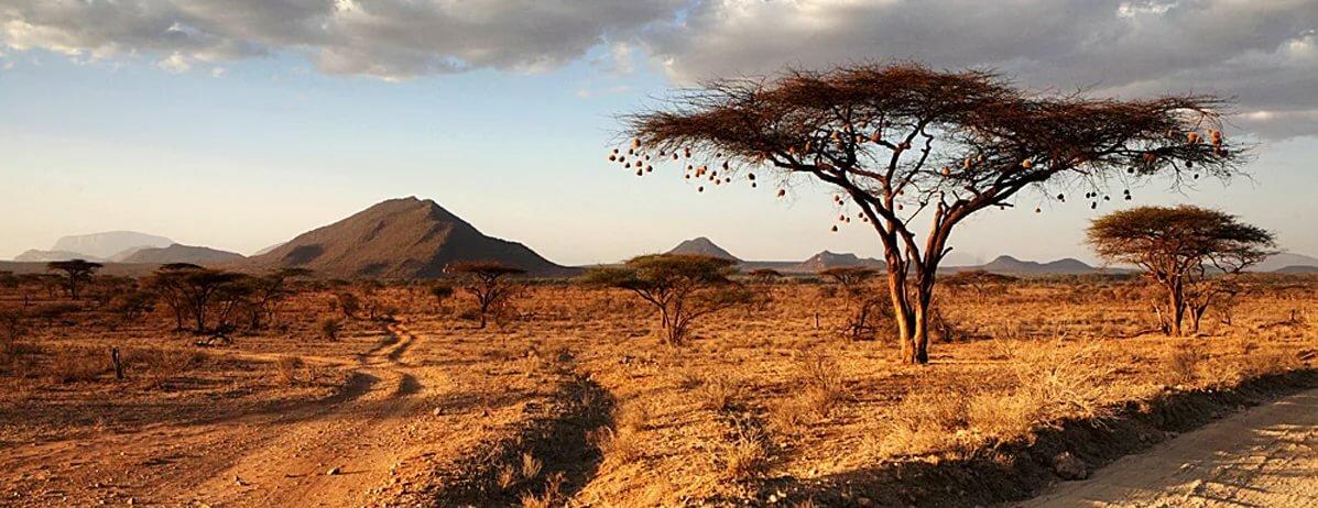 основе африка территория картинки все декоративные покрытия