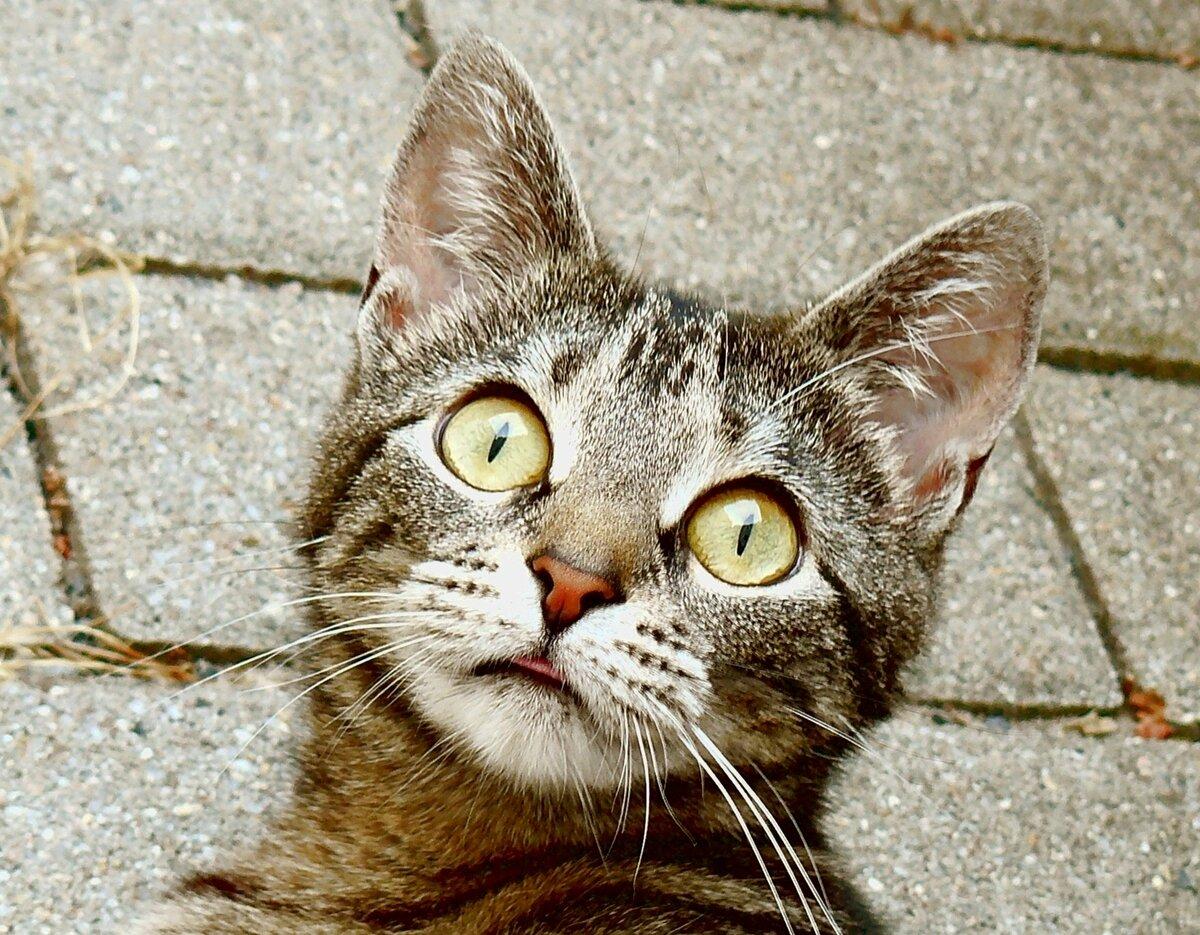 озадаченный кот картинки помогут, можете обойтись