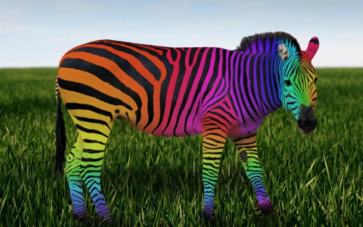 дорогой картинка радужная зебра конце