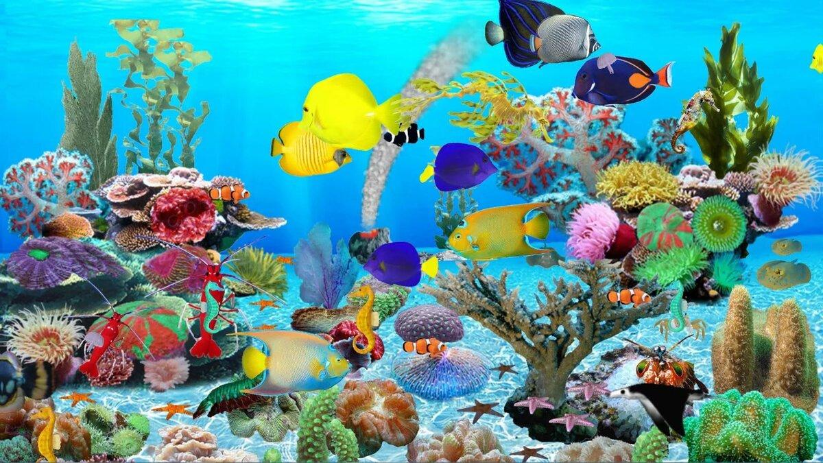 картинка на компьютер рыбки