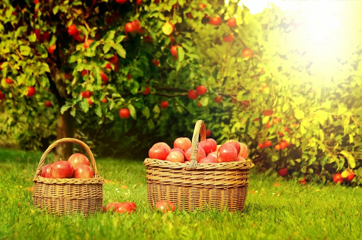 Яблочный Спас в 2019 году: традиции