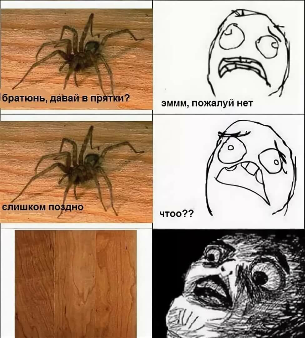 День, смешная картинка у тебя паук
