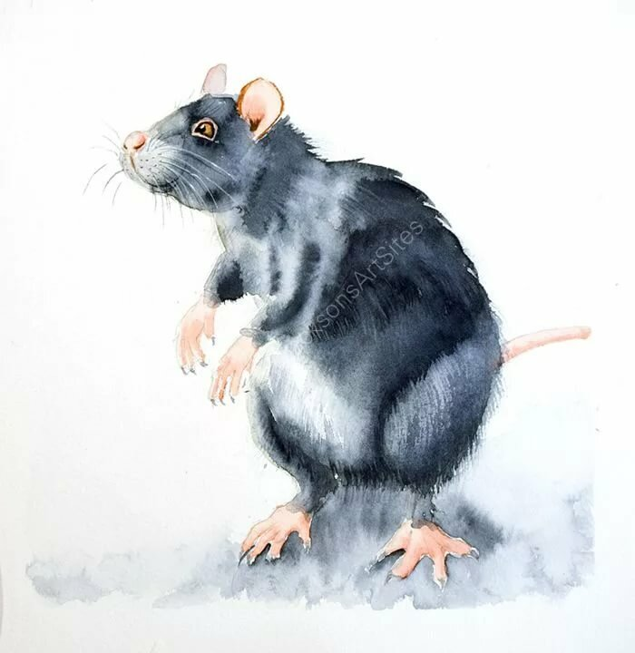 Крыша крыса картинки для детей