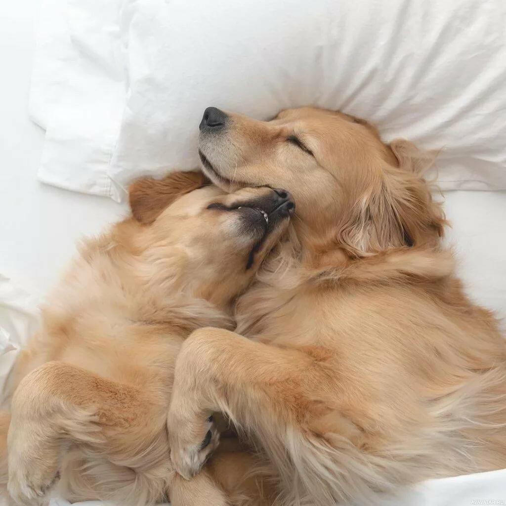Картинки обнимающихся собак