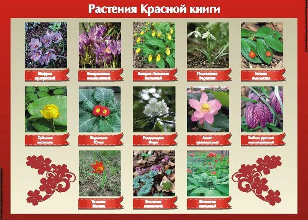 Растения красной книги цветы с картинками