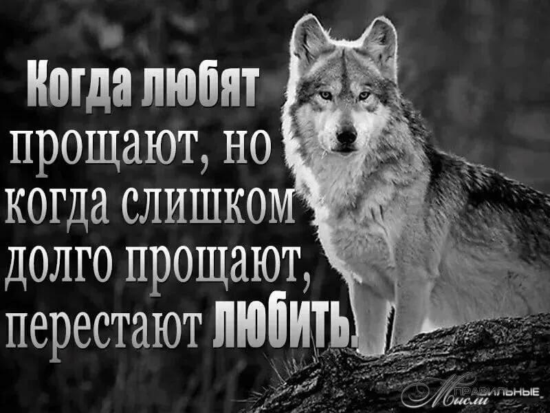 картинки волков с статусами смыслом мужские других детей родились