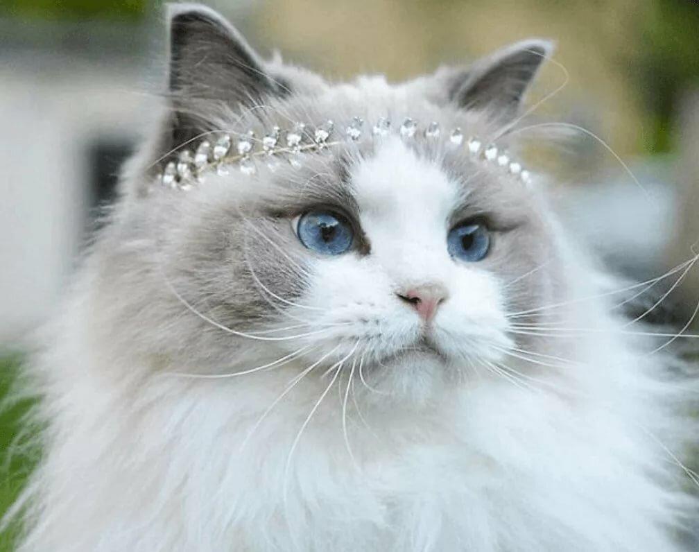 таланта красивейшие коты мира можно закрепить стену