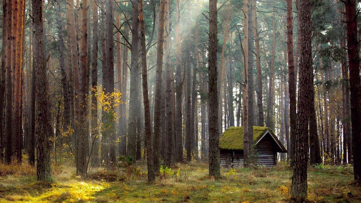 Картинка дмитрий с леса рождения