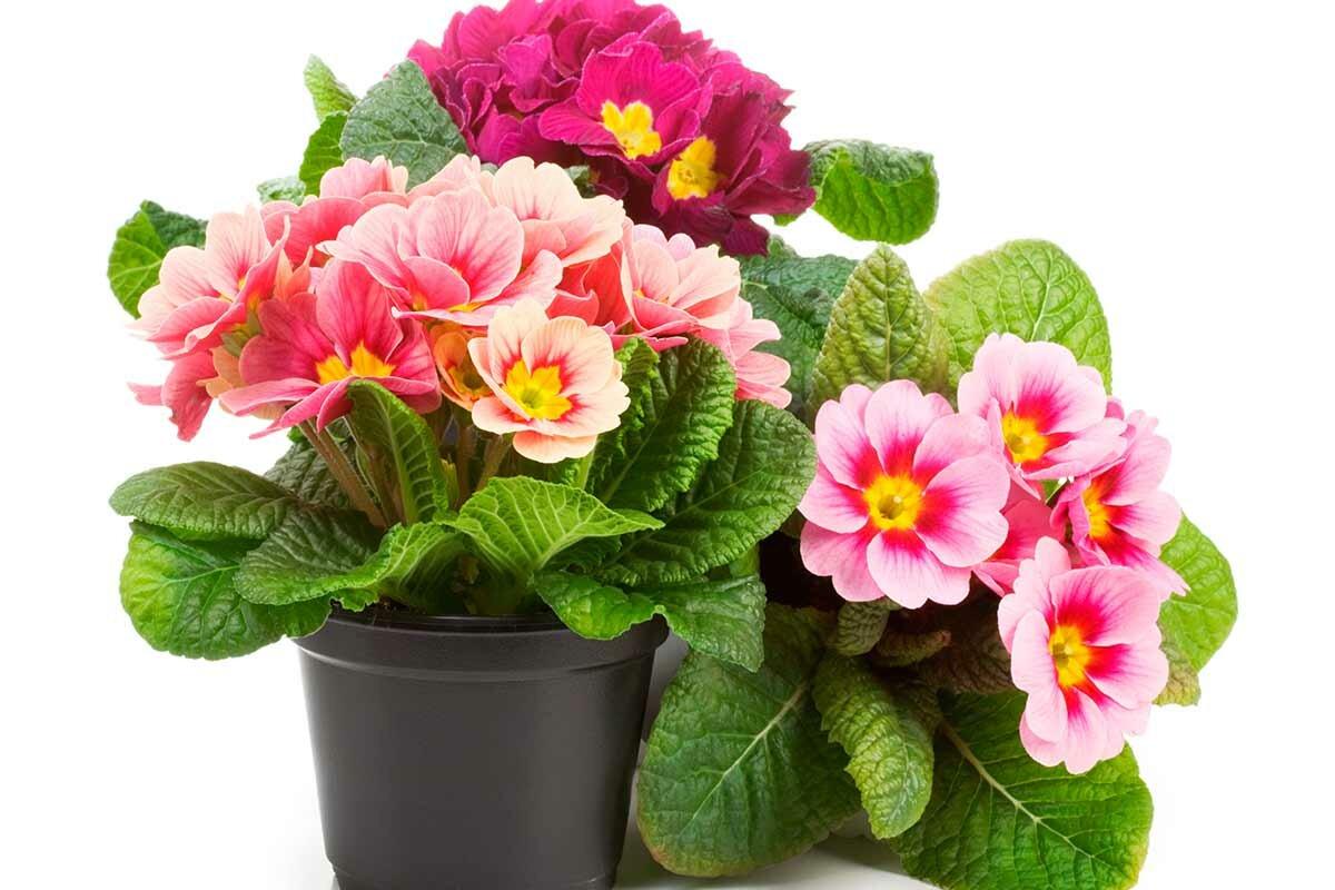 Комнатные растениям картинки