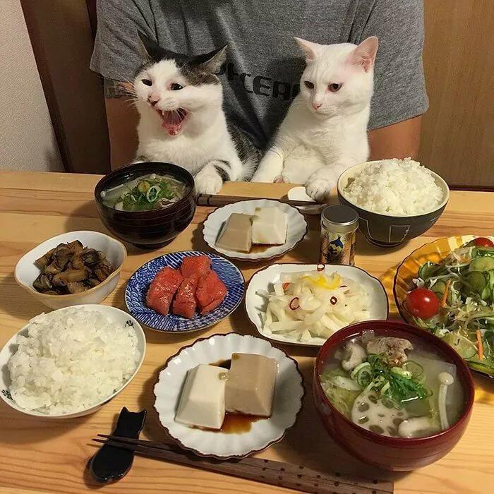 Прикольные картинки пообедал, спокойной