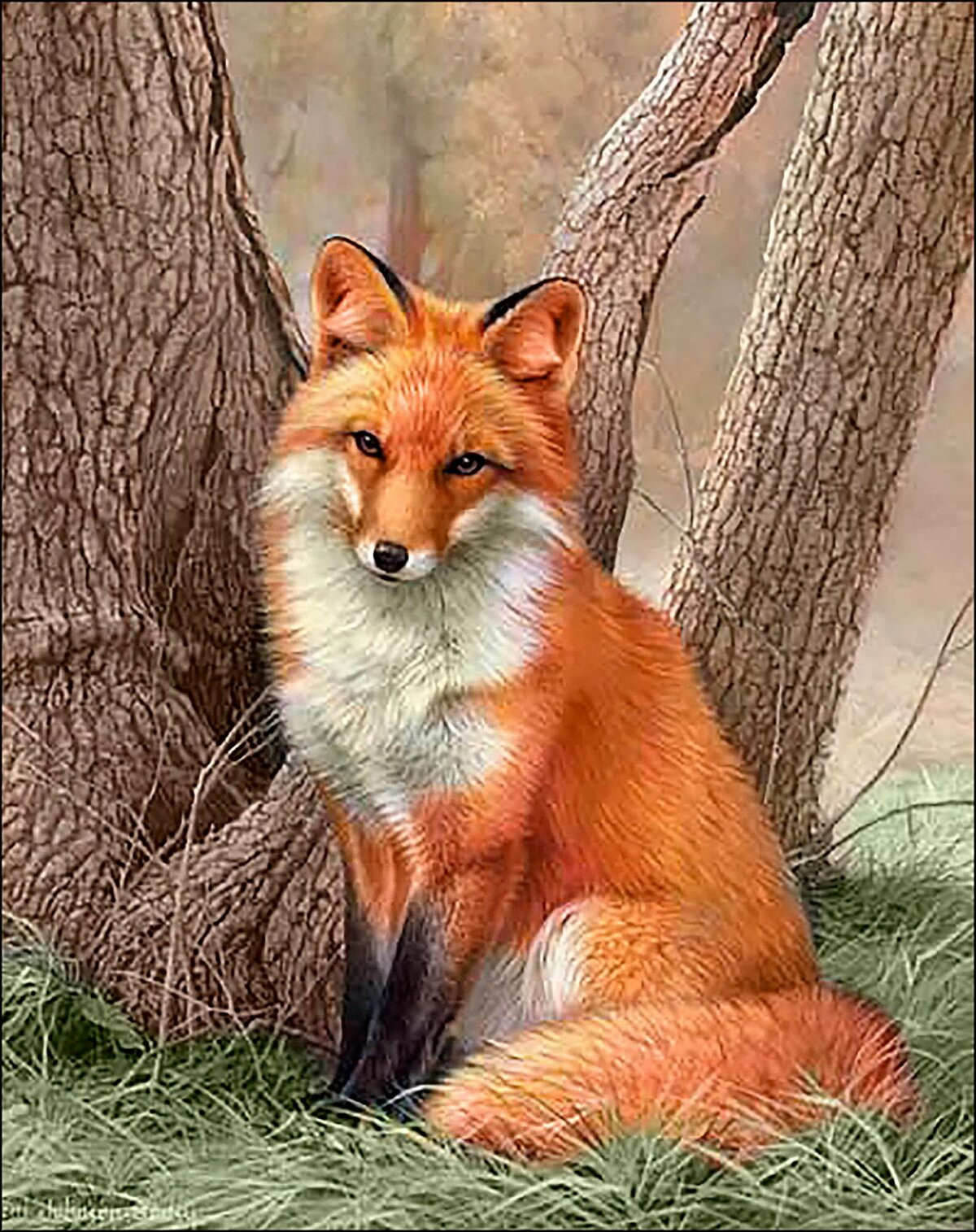 Картинки с лисицей