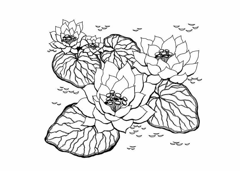 Картинки раскраски царство растений