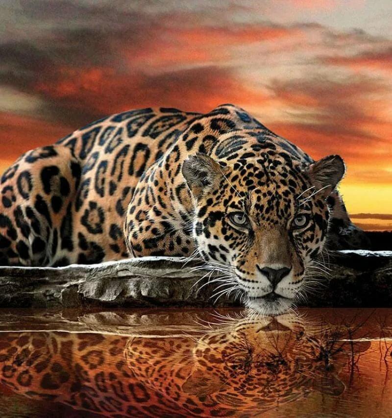 Картинки тигра анимация, картинки природе журнал