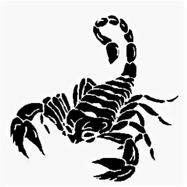 рисунок скорпиона на стене фото вас