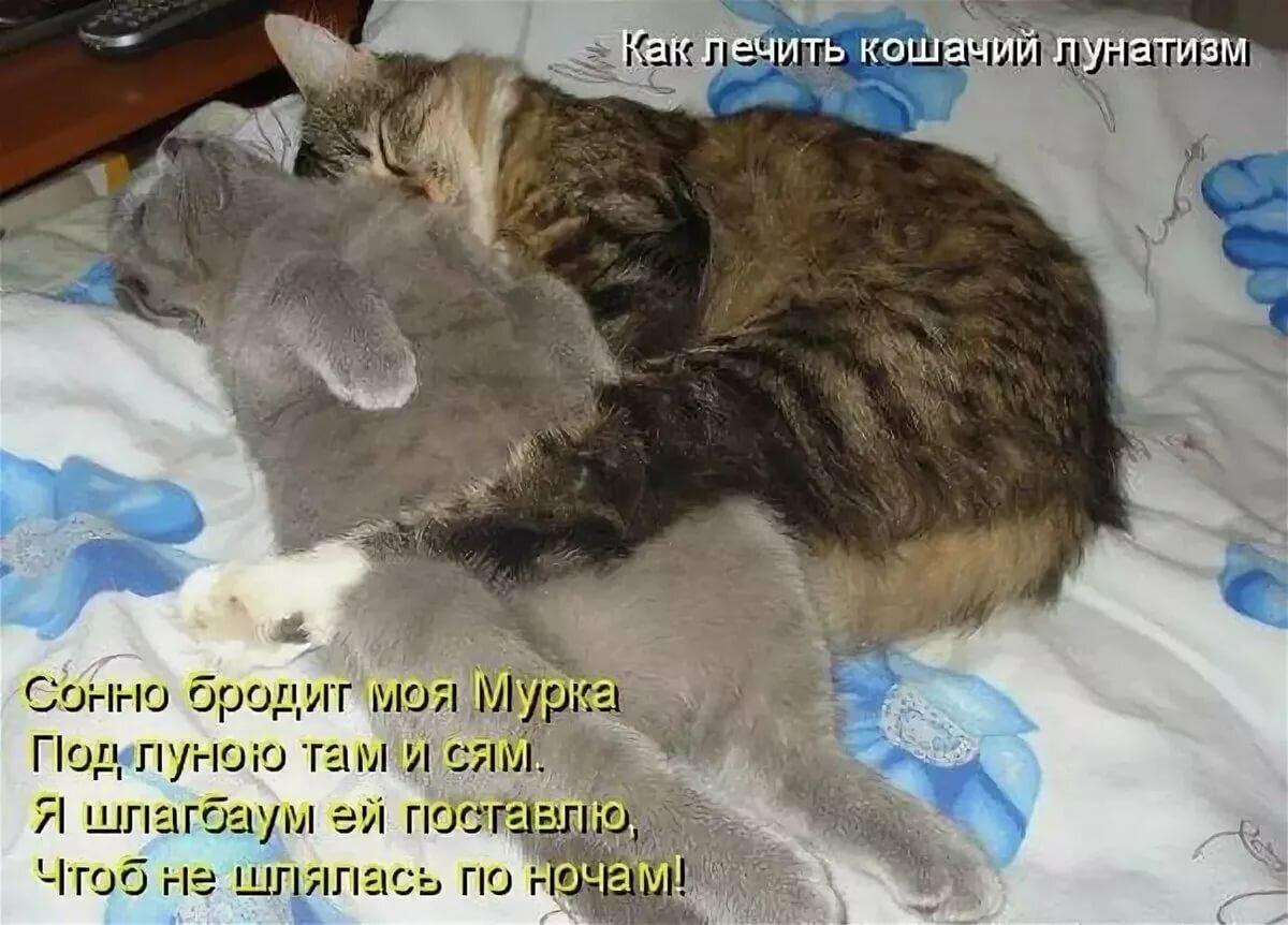 Покажите нам картинки с кошками и надписями