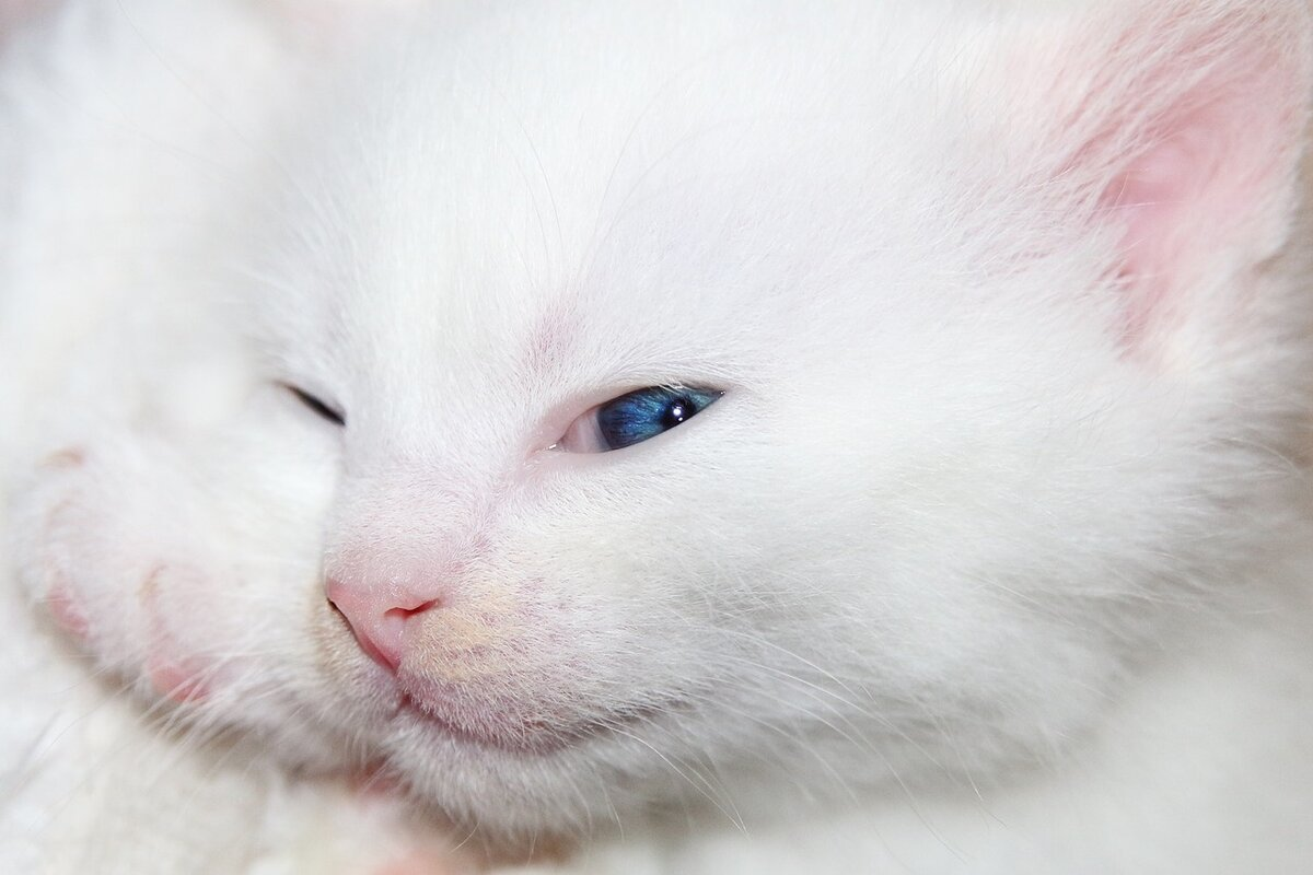 Открытки кошки белые