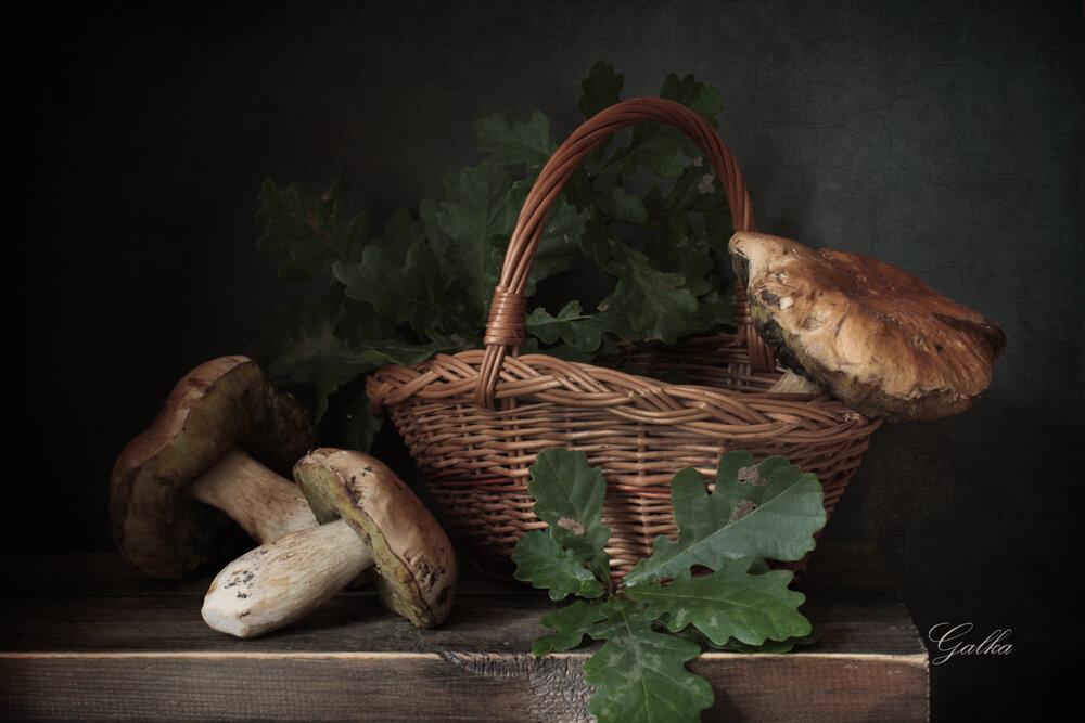 даче грибы натюрморт фото распространенной формой