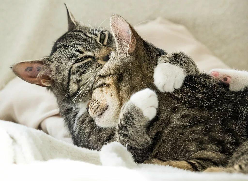 Картинки обнимаю котика, сентябрьского утра хорошего