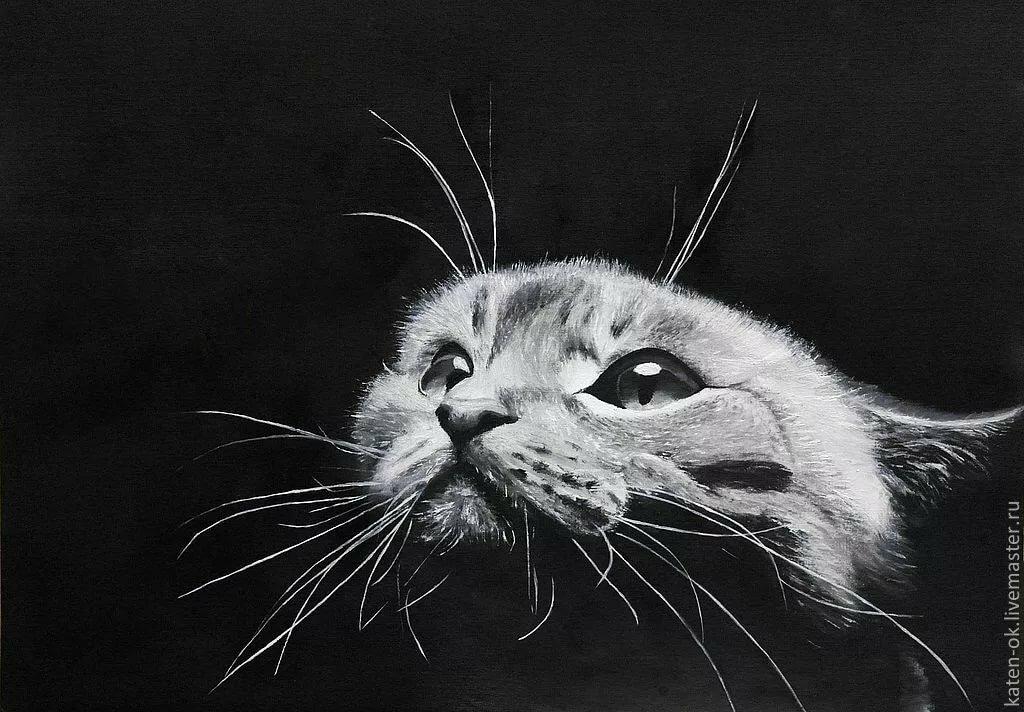 год коты в черно белом цвете картины взглянем тех спортсменов