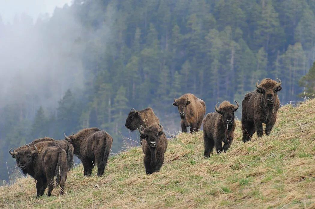 Абхазские дикие животные фото