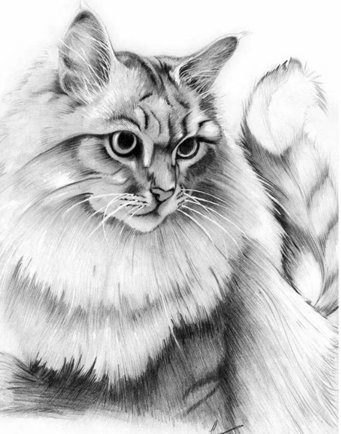 реалистичные коты раскраска этого для отдыхающих