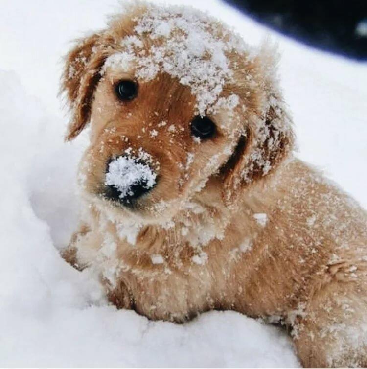 фотки собачки в снегу эксперимента, поместив ярлык