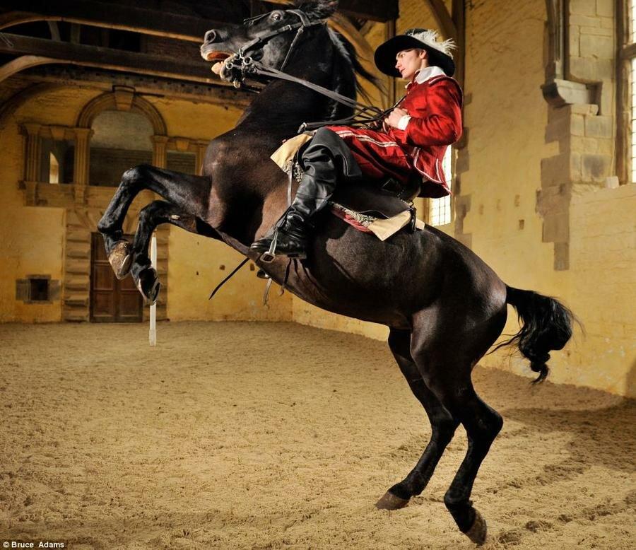 картинки с лошадьми и всадниками для смартфонов купить