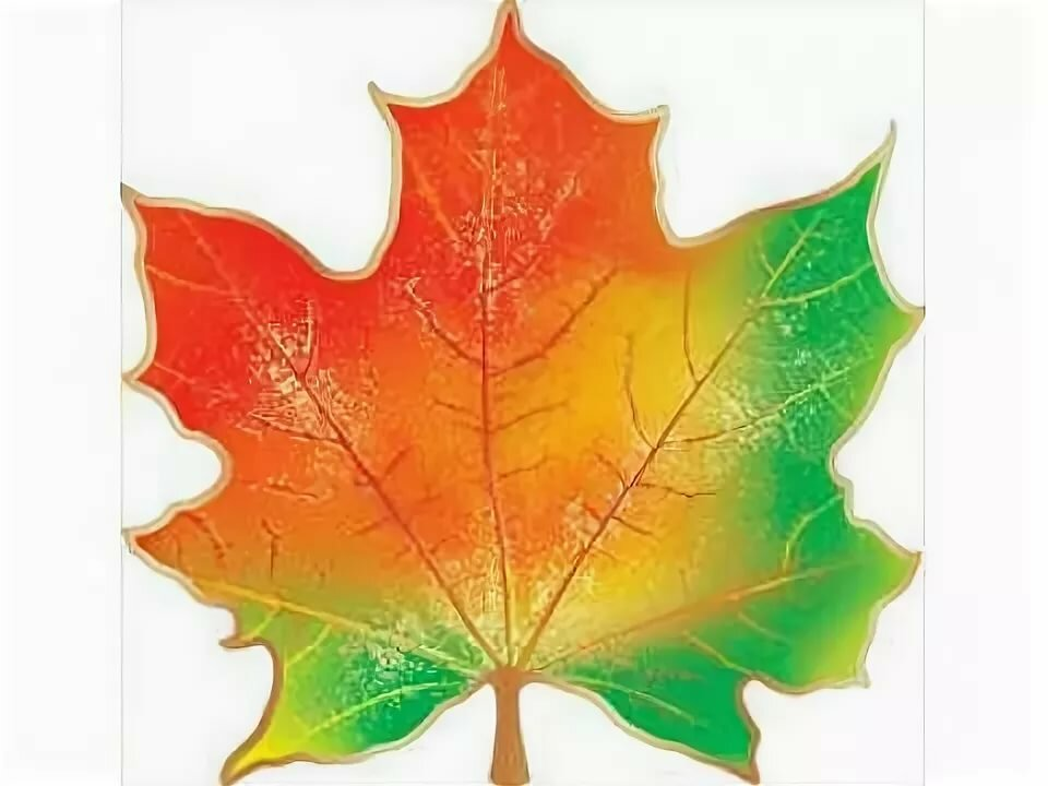 Кленовые листья картинки цветные распечатать
