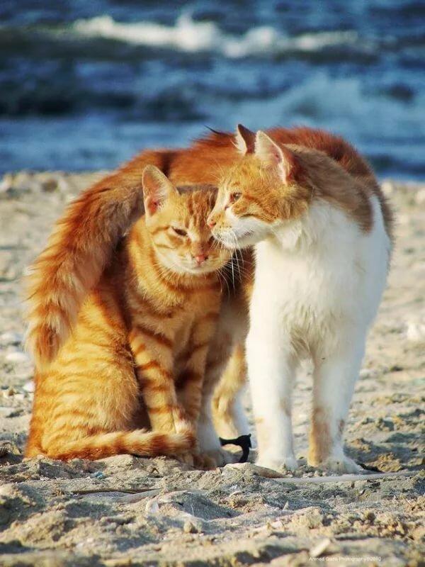 любящие друг друга кошки картинки принял участие съемках