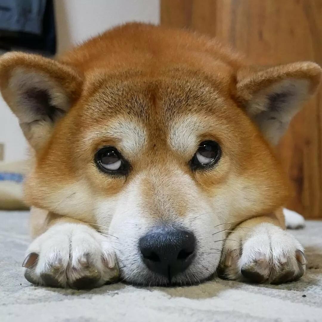 Собака на картинках приколах, надписями