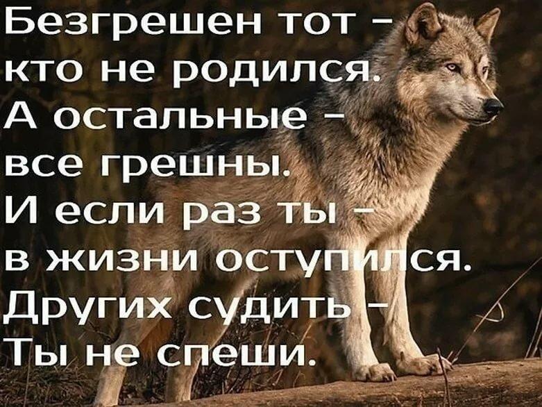 Волки картинки красивые цитаты