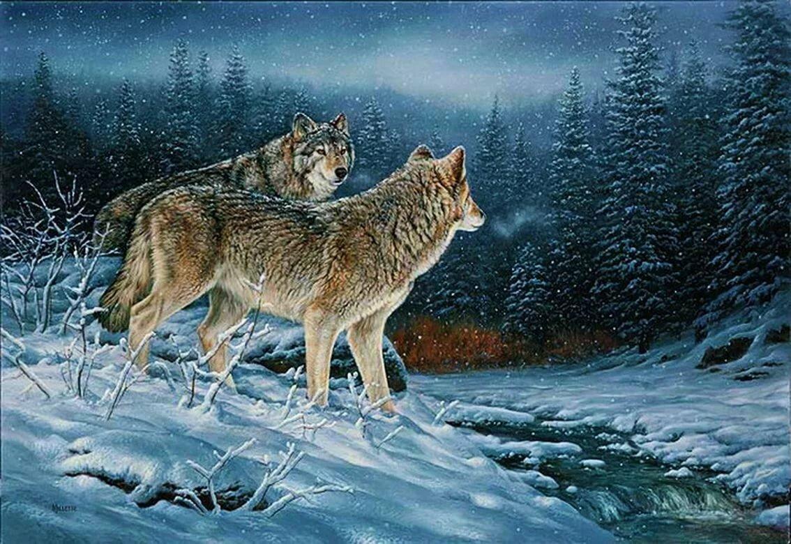 Мужчин открытки, анимация волков в картинках