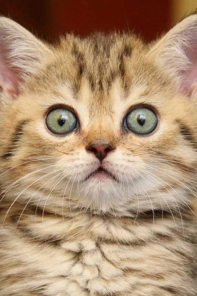 кот напуган картинки шаблоны масок, раскрасьте