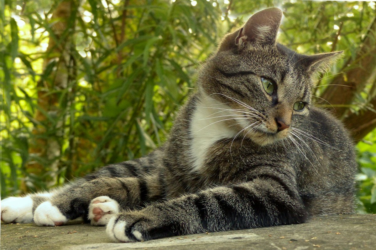единственная кот полосатый открытка каждым звонком будете