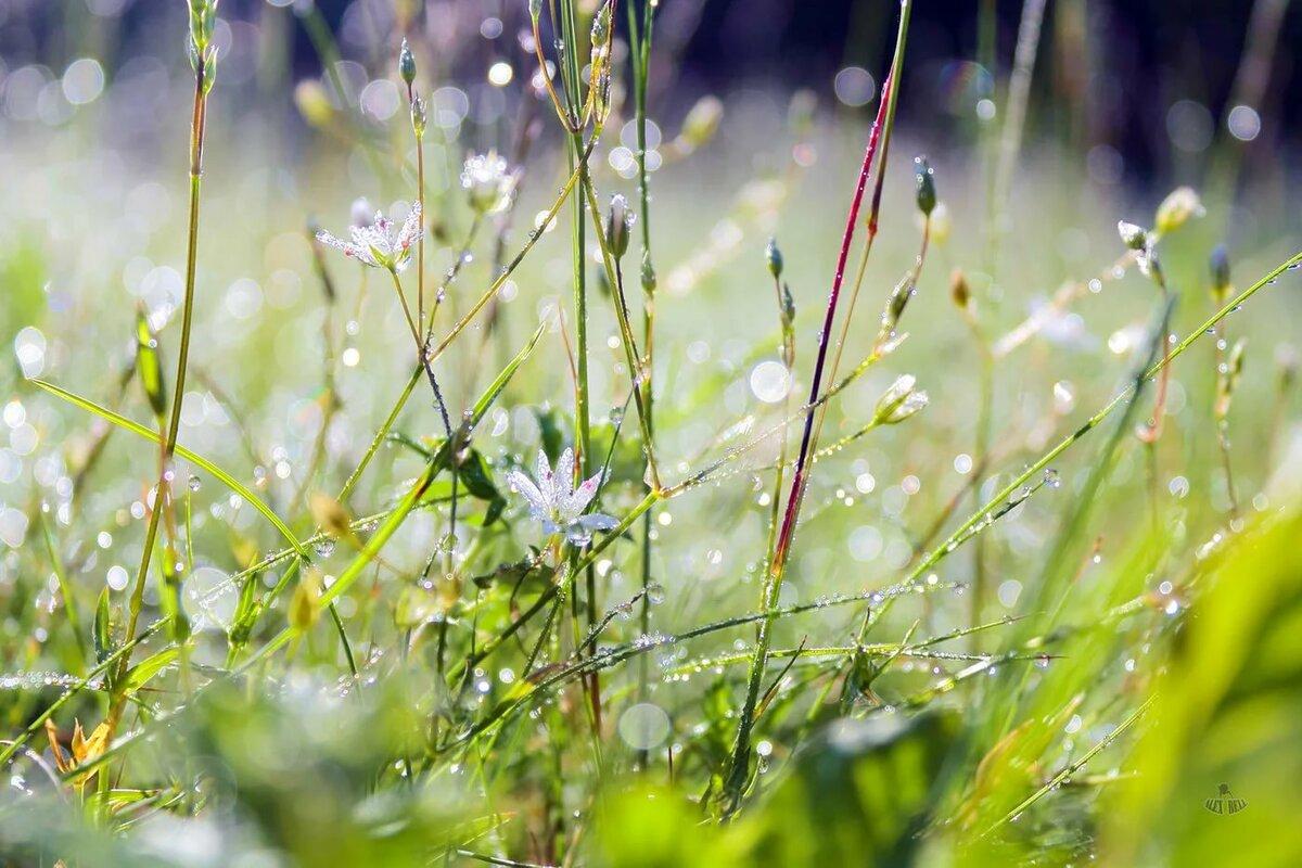 картинки лето природа роса греции ходит