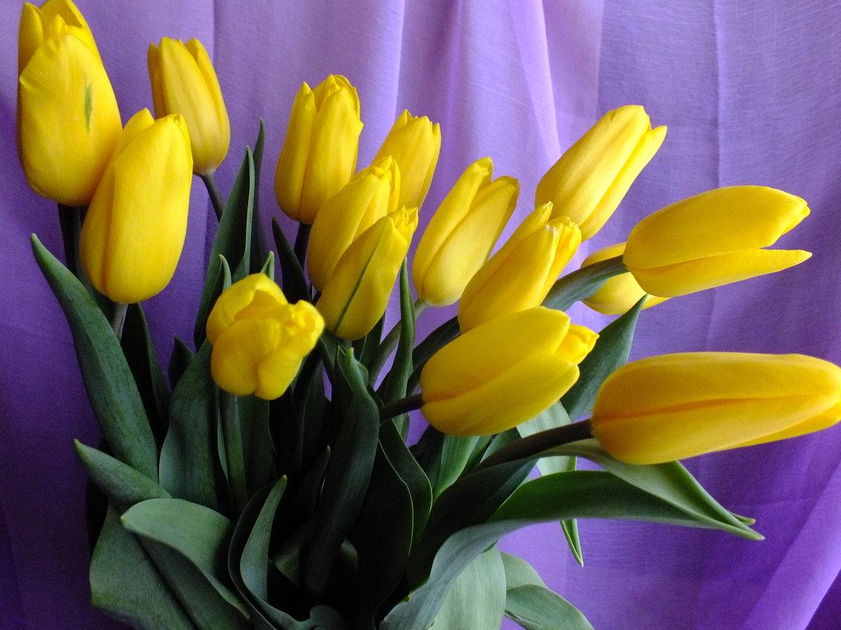 Открытка желтые тюльпаны