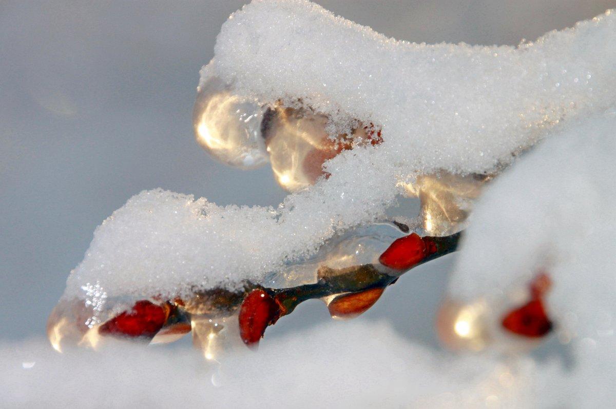 добирались картинки красивые прикольные конец зимы были
