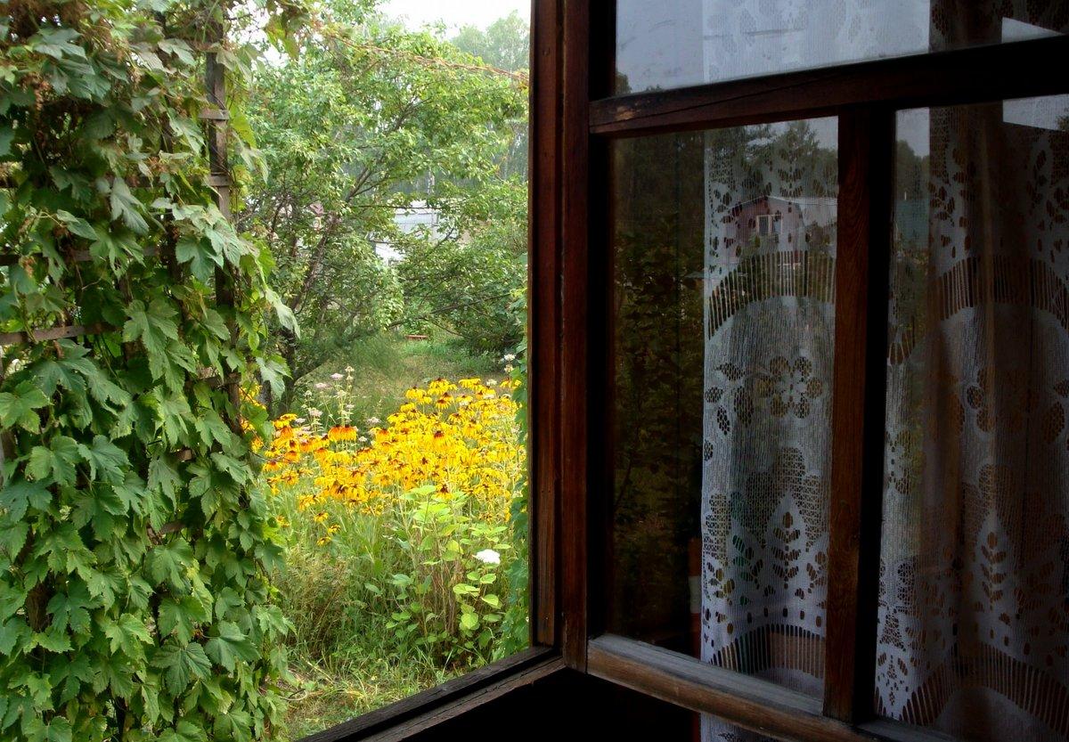 Лето за окном картинки
