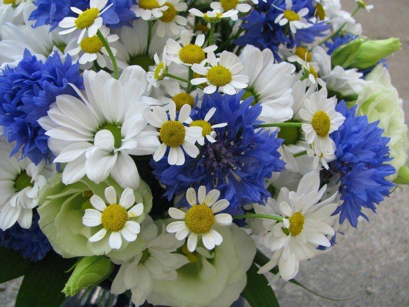Открыток, картинки цветов васильки и ромашки