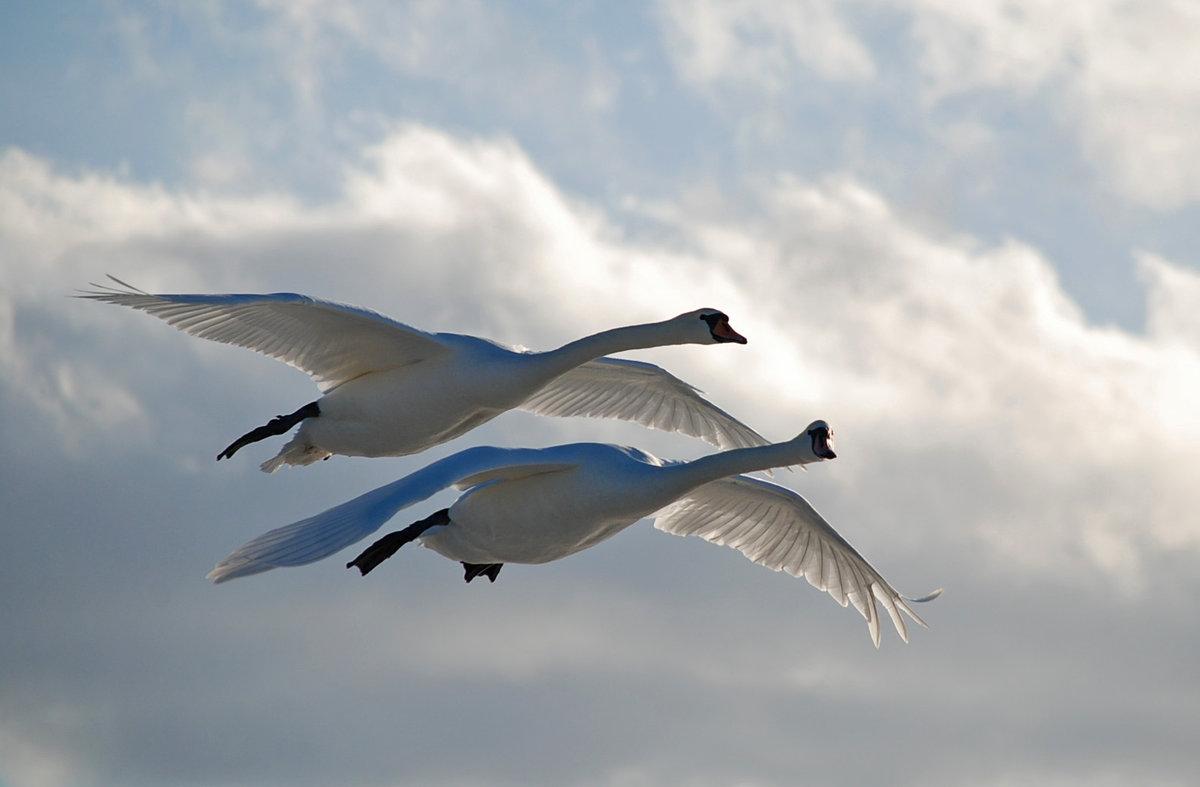 Картинки смоленска с высоты птичьего полета тот