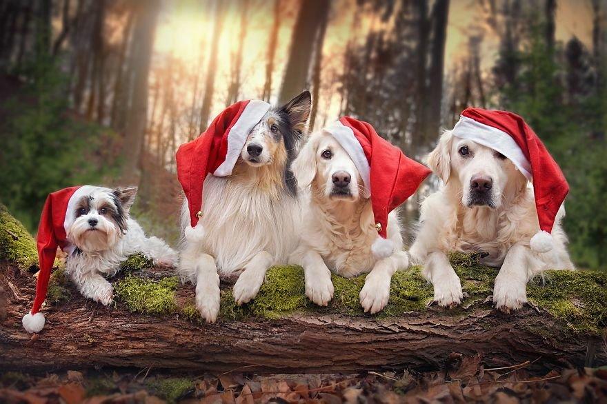 суповой новогодний позитив фото объединять