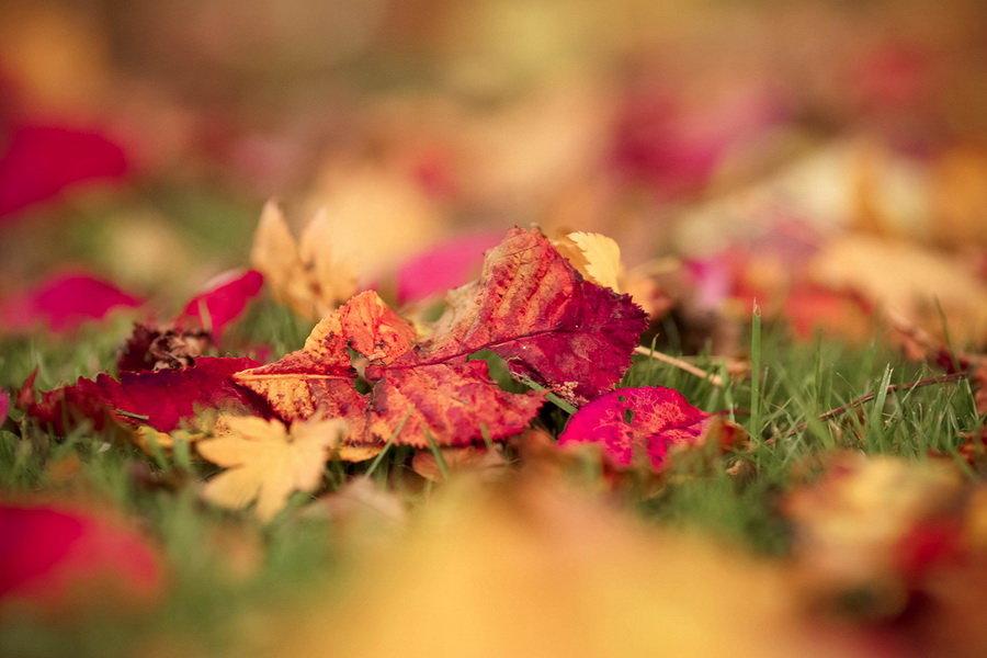 Нежная осень картинки фото