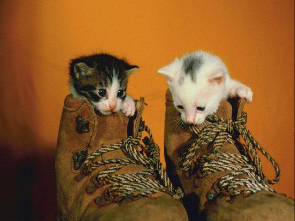 Картинки с приколами котята, дню полиции