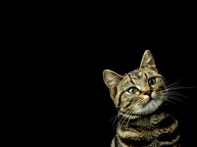 Картинки на черном фоне кошки