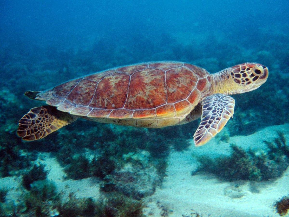 морская черепаха фото и названия вас серьезные